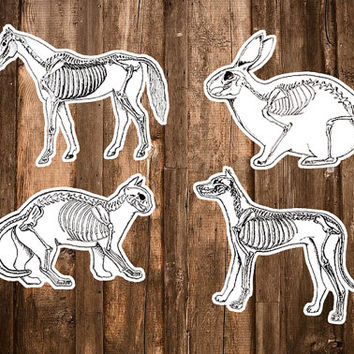Anatomy Stickers - Set of 4 Anatomical Hand Drawn Stickers - Animal Skeleton Sticker Pack - Science/Veterinary Gift - Cat,Dog,Horse,Bunny
