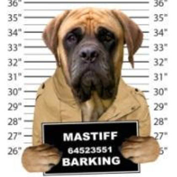 mastiff barking t-shirt mens t-shirts dogs mugshot t-shirts mug shirt dog pets tshirt pet lover