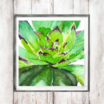Vintage Botanical Watercolor Print green succulent olympicum plant  wall decor home decor original art print watercolor art digital download