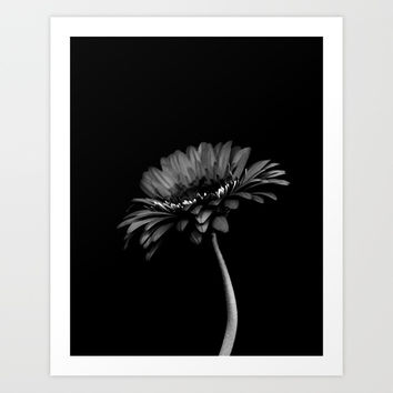 Daisy gerbera. Black and white Art Print by vanessagf