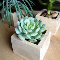 Petite Succulents in Natural Wooden Boxes - Set of 3