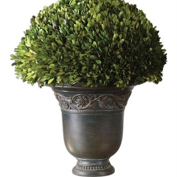 Globe Preserved Boxwood By Uttermost