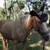 Witch Costume for Horse or Pony - Halloween Costume for Equine