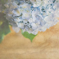 Art Photography Digital Photograph Flower Art Blue Hydrangeas 8x12 Photographic Print Blue Spring Art