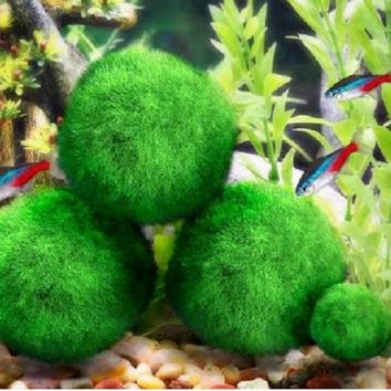 Cladophora Live Aquarium Plant Fish Tank Shrimp Nano For MARIMO MOSS BALLS Fish