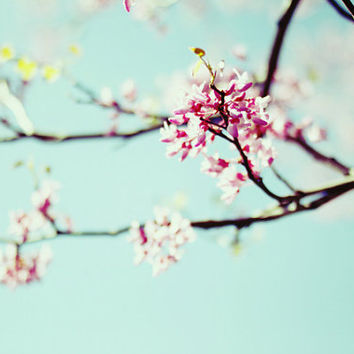 Spring, blossoms, floral, pink, teal, fine art photography