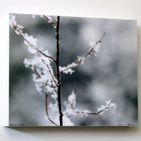 Brown and Grey, Tree Branch in Snow,  Nature Photography, Wall Decor, 8X10 Wood Panel, Fine Art, Wall Hanging, Ready to Hang