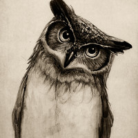 Owl Sketch Stretched Canvas by Isaiah K. Stephens