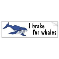 BD- I brake for whales bumper sticker from Zazzle.com
