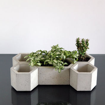 Set of 5:  Five Hexagon concrete planters, Cactus planter, Succulent planter, Concrete pot, Hexagon planter, Modern planter, Concrete