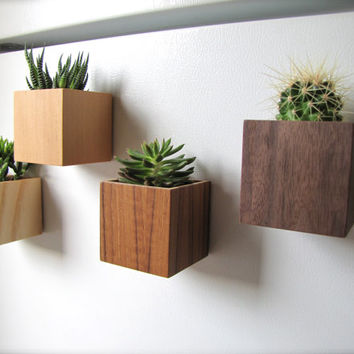 "Oh My Ombre, Set of 4 Cube Planters (3""), Magnetic, Wall, or Desktop, in sustainable Birch, VG Fir, Teak, Walnut, air plants sold separately"