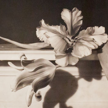 HORST P. HORST 'TULIPS, OYSTER BAY NY' PHOTO, 1989