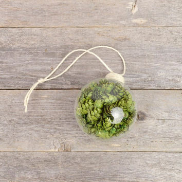 Craft Beer Ornament with Hops / Beer Gifts / Homebrewers Christmas Decoration / Christmas Gifts / Beer Stocking Stuffers/ Faux Hops