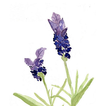 Lavender Print of original watercolor painting, purple lavender and green, Plants, Botanical herb, mothers day, digital print