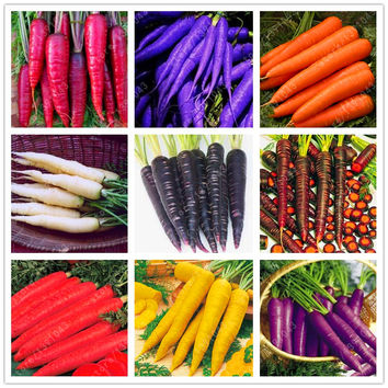 500 pcs/bag Five inches ginseng carrot seeds potted fruit ,Organic healthy seeds vegetables, outdoor plant for home garden