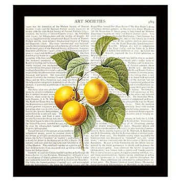 Apricots Dictionary Art Print 8 x 10 Fruit Botanical Kitchen Decor