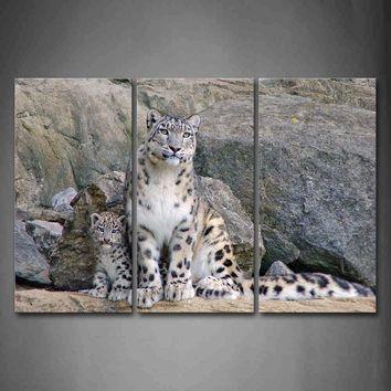 3 Piece Wall Art Painting Snow Leopard Sit On Sand And Back To Rocks Print On Canvas The Picture Animal 4 Pictures