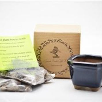 Blue Wisteria Bonsai Seed Kit- Gift - Complete Kit to Grow