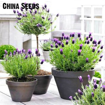 Free Shipping 100pcs Lavender bonsai herb bonsai garden balcony pot Four Seasons flower bonsai For Indoor Plants Christmas Gift