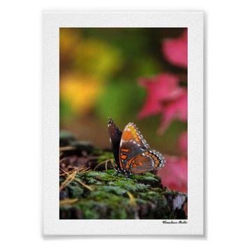 Colorful Butterfly Mini Art Poster Print