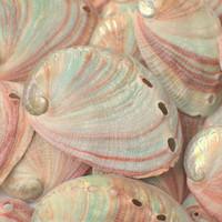 10 Red Green Abalone Sea Shells - Natural Craft Decor Beach Wedding Reception Chic Bulk Seashell Aquarium Supply Decoration