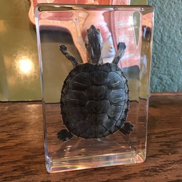 Large Red Eared Slider Turtle Paperweight