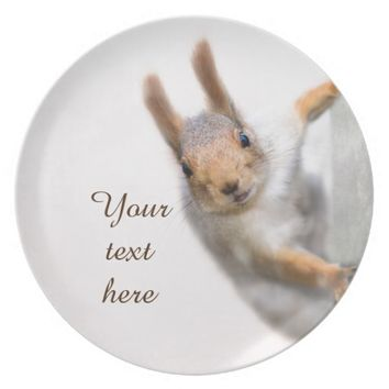 Curious squirrel dinner plate