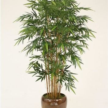 7' Natural Bamboo Tree In Glazed Mocha Stoneware Pot