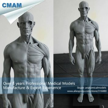 CMAM-PRC01 30cm Human Skeleton Anatomical Model Anatomy Tools Model Skull Head Muscle Bone Medical Artist Drawing