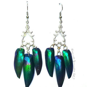Rare - Beetle Wing Earrings - Elytra Beetle - Beetle Earrings - Beetle Wings - Real Wings - Wing Earrings - Insect Earrings - Insect Jewelry