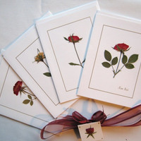 Pressed Flower Cards, Set of 4 Rose Note Cards Tied With  Ribbon