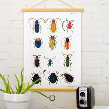 Vintage Pull Down Chart Reproduction. Insects and by curiousprints