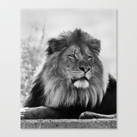 Lion Stretched Canvas by Natural Impressions
