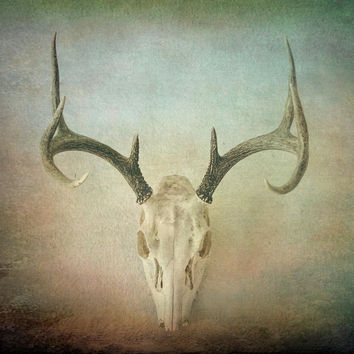 Skull And Antlers Textured Photograph