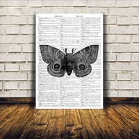 Moth print Modern home decor Butterfly poster Insect drawing TO320-B