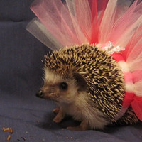 Hedgehog /  Guinea pig  tutu Ballet pink by ChubbyHedgehog on Etsy