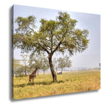 Gallery Wrapped Canvas, African Landscape With A Acacia Tree