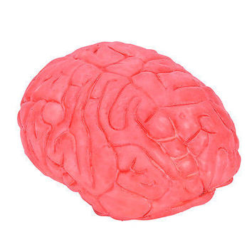 Scary Haunted House HUMAN BRAIN Organ Body Part Halloween Horror Prop Decor HUCA
