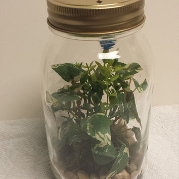 Mason Jar Quart Sized Silk Terrarium with Gold Decorated Lid