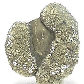 Golden Pyrite Metallic Crystalline Druzy nucleated on Fossil, Geology Paleontology Specimen Earth Curiosity Geo Gemstone from New York