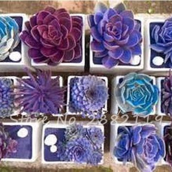 2017 new hot sale! 100 Rare Mix Lithops Seeds Living Stones Succulent Cactus Organic Garden FlowerSeeds Potted Flowers Fleshy.