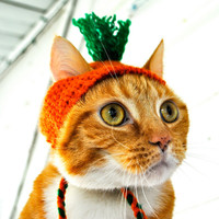 Carrot Costume - Cat