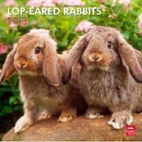 Lop-Eared Rabbits 2013 Square 12X12 Wall Calendar (Multilingual Edition)