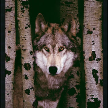 "0-018362>38x26"" Gray Wolf Wall Art Satin Black"