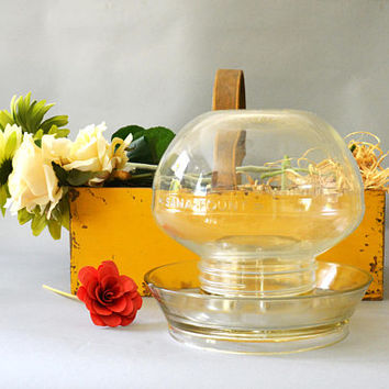 Glass Bird Feeder, Bird Waterer, Plant Holder, Vintage Terrarium, Succulent Plant Holder, Glass Plant Display, Glass Cloche, Glass Dome
