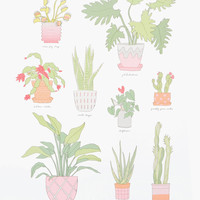 Houseplant Varieties Print