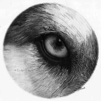High Quality Print From The Original Pencil Sketch 'The Northern Eye' Malamute Husky Dog Picture Open Edition inc COA