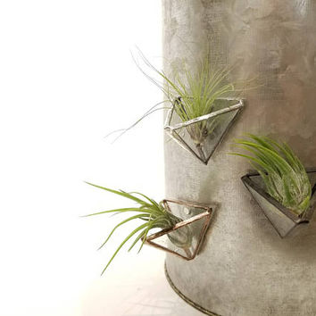 Air Plant Holder Magnets - Set of three / Stained Glass Air Plant Accessory / Desk Accessories