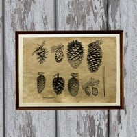 Pine cones print Natural history art forest illustration Old paper home decor 8.3 x 11.7 inches