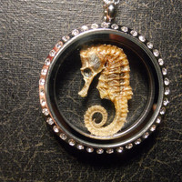 Seahorse Taxidermy Rhinestone and Glass Locket by TheCuriositeer